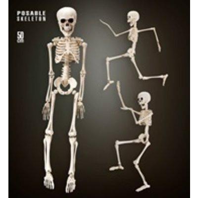 Skelet 50 cm