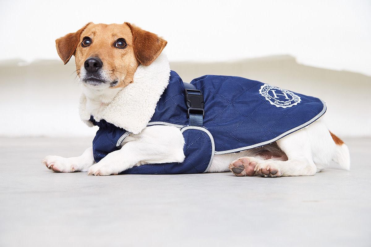 HARCOUR HARCOUR jas hond joly