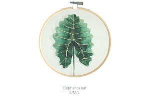 Elephant's Ear