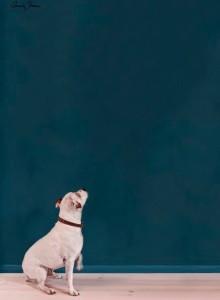 Annie Sloan Wallpaint, Aubusson Blue: 2,5l - 100ml