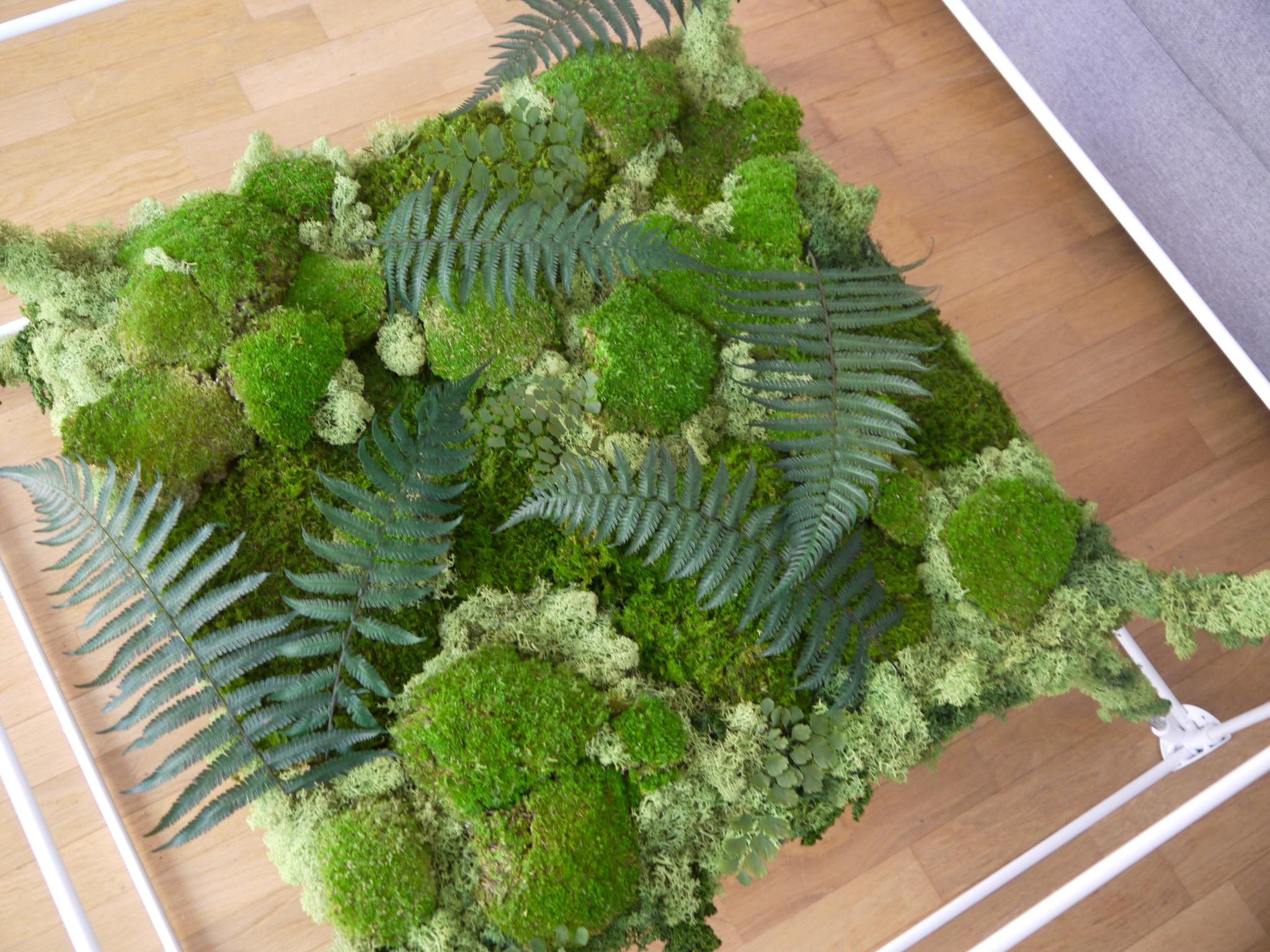 Moos Couchtisch GREEN CUBE mit echten konservierten Pflanzen
