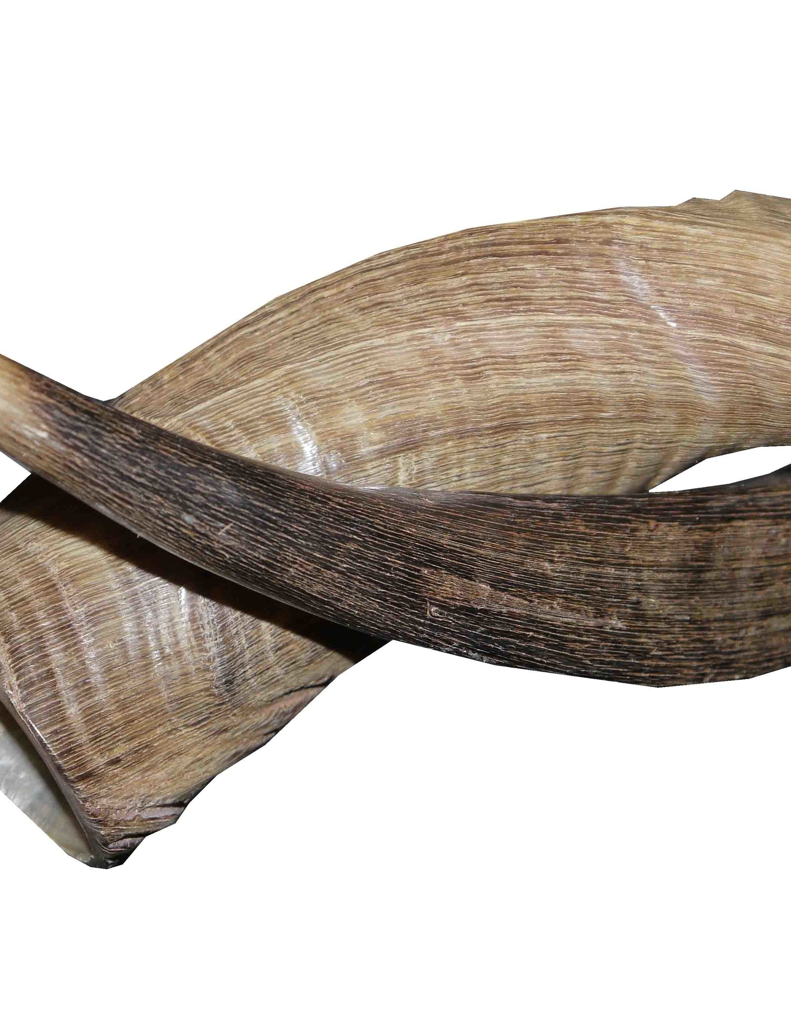 Kuduhorn teilgeschliffen doppelt auf Metallstand