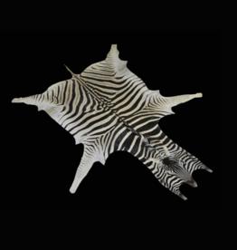 Zebrafell M321 Okahanja, das schönste Zebrafell von allen!