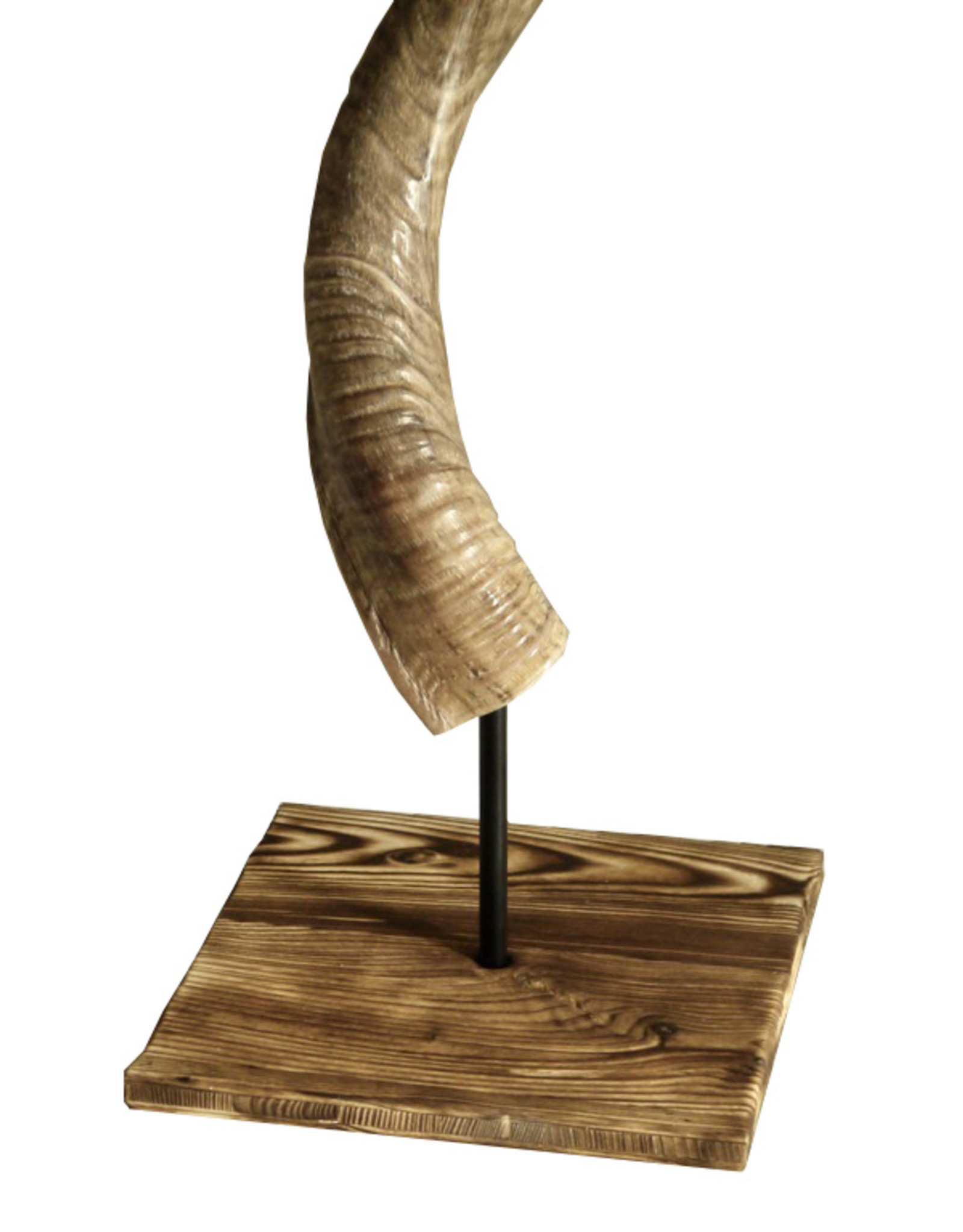 Kudohorn mit speziellen Stand aus abgeflammten Holz
