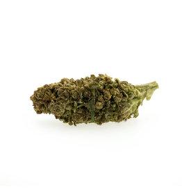 CBD Express Critical AK - CBD organic blossom aroma tea