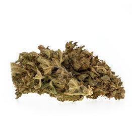 CBD Express Gelato EU - CBD organic blossom aroma tea