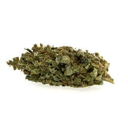 CBD Express Premium Super Lemon Haze EU - CBD Bio Blüten Aromatee