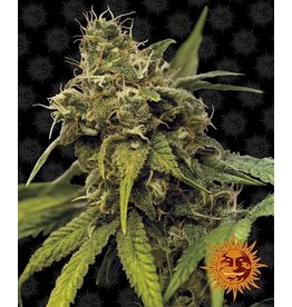 Barneys Farm Utopia Haze cannabis seeds