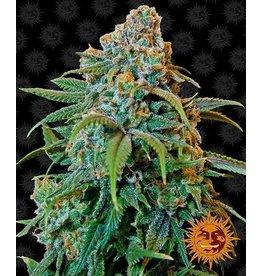 Barneys Farm Cannabissamen Liberty Haze