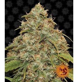 Barneys Farm Cannabissamen CBC Lemon Potion Auto