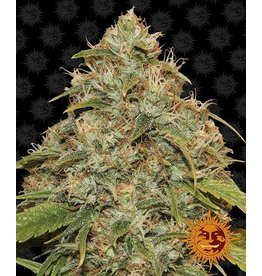 Barneys Farm Graines de cannabis CBC Lemon Potion Auto