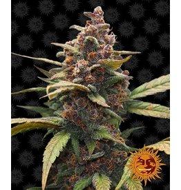 Barneys Farm Ayahuasca Purple cannabis seeds
