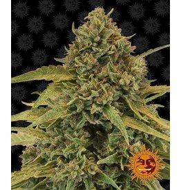 Barneys Farm Bad Azz Kush cannabis seeds