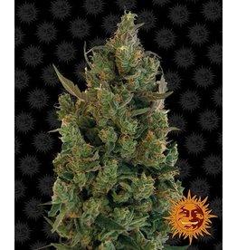 Barneys Farm Blueberry Cheese cannabis seeds