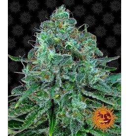 Barneys Farm Critical Kush cannabis seeds