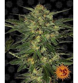 Barneys Farm Cannabis seeds LSD