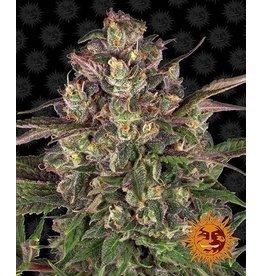 Barneys Farm Peyote Critical cannabis seeds