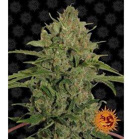 Barneys Farm Triple Cheese cannabis seeds