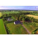 Proeverij Taste The Summer, wijngaard Domaine Les Damianes, zondag 30 juni