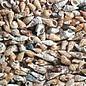SEAURCO Brown Cerith Shells