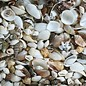 SEAURCO Assorted Craft Shells (up to 3cm)