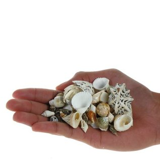 Assorted Craft Shells (up to 3cm)