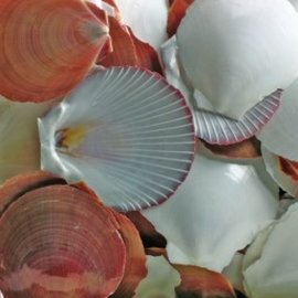 Sun and Moon Scallops