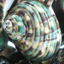 SEAURCO Green Turbo