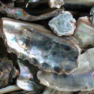 Assorted Abalone Pieces