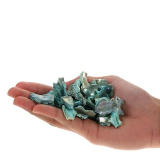 Green Abalone (Polished Offcuts)