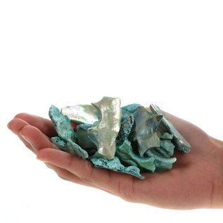 Abalone Polished Offcuts - Green