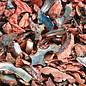 Abalone Polished Offcuts- Peach