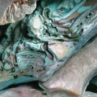 SEAURCO Abalone Polished Offcuts- Green