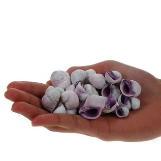 Assorted Purple Druppa
