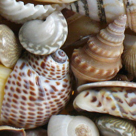 Assoted Polished Shells