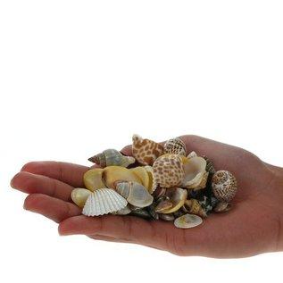 Assoted Polished Shells