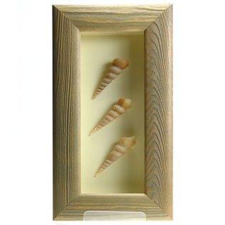 Triple Shell in a Grey Box Frame