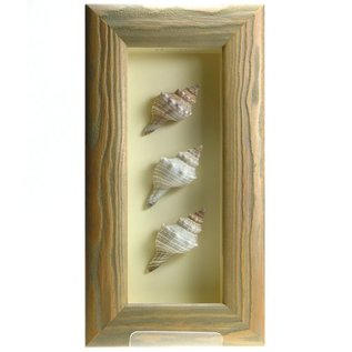Triple Shell in a Grey Box Frame