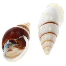 SEAURCO White Striped Snail 3cm