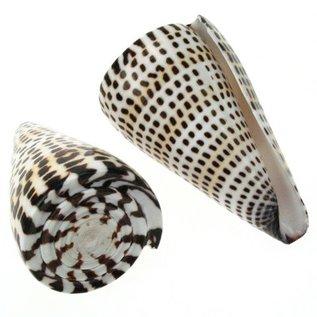 SEAURCO Litteratus Cone 8-9cm