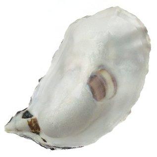 Assorted Deep Oyster Shell Half 7-10cm
