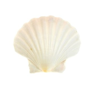 SEAURCO Small Deep Scallops with ground edges 8cm. Set of 4,