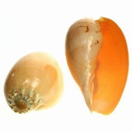 Diadema Melon 10cm