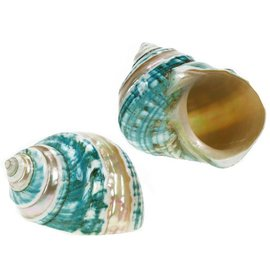 Polished Jade Turbo with Mother of Pearl Stripe 6cm