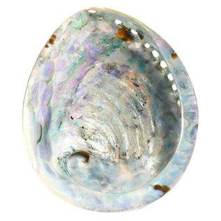 SEAURCO Polished Opal Abalone 17cm