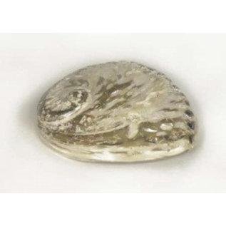 Polished Opal Abalone 15cm