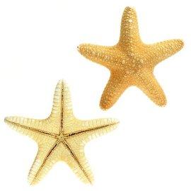 Jungle Star Fish 7.5cm