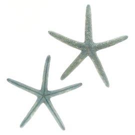 "Starfish Natural Blue 4-5"""