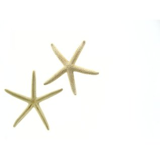 Bleached Blue Starfish 10cm