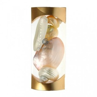 Polished Shells Gift Set - Gold